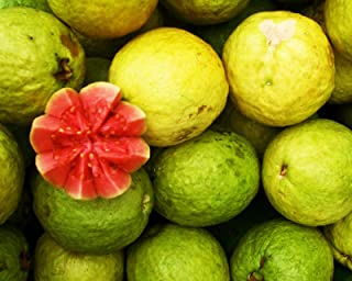 HOT - Real Guave Seeds, Psidium Guava, Guava, Delicious Fruit, Fruits After 2-4 Years 5000 Seeds