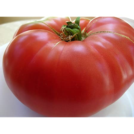 75+ Mortgage Lifter Tomato Seeds- Heirloom Variety- for 2021- by Ohio Heirloom Seeds