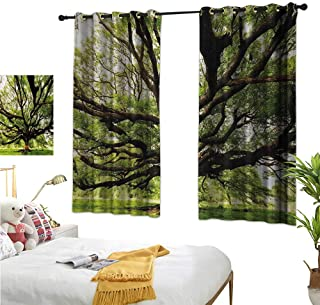 Warm Family Waterproof Window Curtain Nature,The Largest Monkey Pod Tree in Thailand Eastern Green Big Branches Growth Eco Photo,Green Brown 63