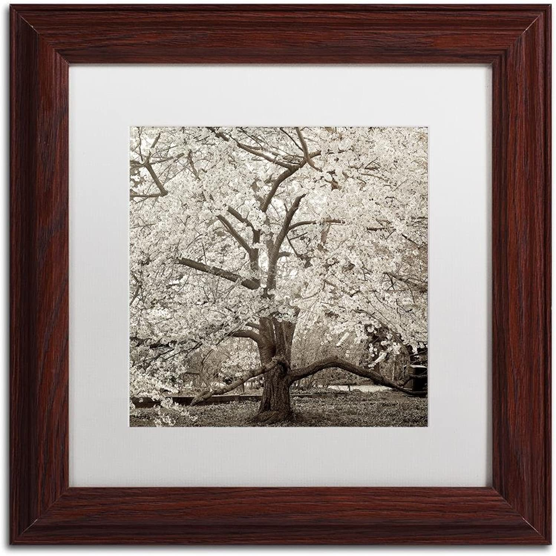 Trademark Fine Art Hampton Magnolia II by Alan bluestein, White Matte, Wood Frame 11x11