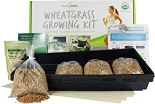 Handy Pantry Wheatgrass Growing Kit - Hydroponic - Organic - Non-GMO - Easy & Fast to Grow Wheat Grass at Home
