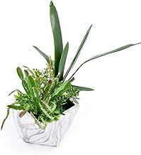 Home Decor Artificial Succulent Plant Cactus Arrangements For Living Room Bookcase Table Decoration Ornaments Green Plants
