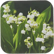 3dRose Lily of The Valley. White. Spring Flowers - Soft Coasters, Set of 4 (CST_215161_1)