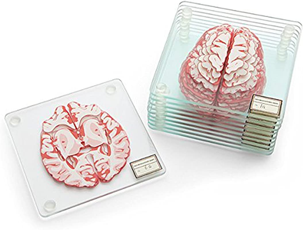 Anatomic Brain Specimen Coasters Set Of 10 Pieces