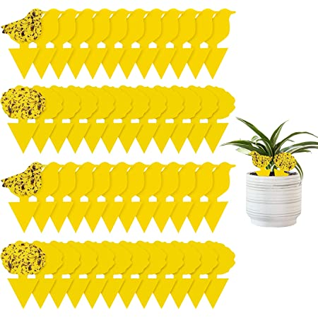 48 Pieces Sticky Traps for Plants Fruit Fly and Fungus Gnat Trap Killer Indoor and Outdoor, Sticky Gnat Traps ,Non-Toxic and Odorless