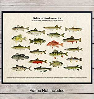 Fish of North America - Unframed Parchment Wall Art Print - Great For Lake House, Beach House, Fishermen - Perfect Home Decor or Gifts - Heddon, Lunkers - Ready to Frame (8x10) Photo