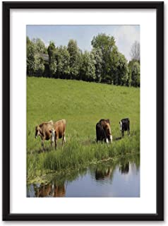 Happy Young Angus Framed Wall Art,Friesian Black Picture Frames White Matting,16''x20''