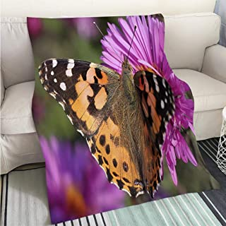 BEICICI Super Soft Flannel Thicken Blanket Close up of Painted Lady Butterfly Art Blanket as Bedspread Gold White Bed or Couch