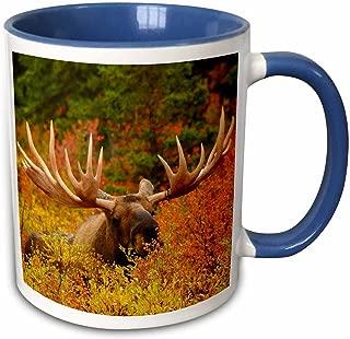 3dRose 142049_6 Bull Moose Wildlife, Denali Park, Alaska Mug 11 oz Blue
