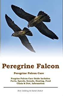Peregrine Falcon. Peregrine Falcon Care. Pergrine Falcon Care Guide Includes: Facts, Speeds, Sounds, Hunting, Food Chain & Diet, Information
