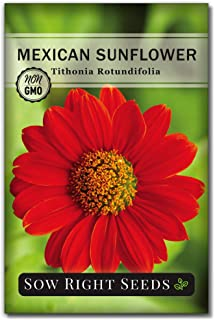 Sow Right Seeds - Mexican Sunflower Seed for Planting- Full Packet with Instructions, Beautiful Non-GMO Heirloom Flower to...