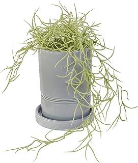 GREENPARK スパニッシュモス 皿付グレープランター 造花 フェイクグリーン