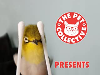 Clip: The Pet Collective Presents