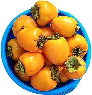 California Hachiya Persimmons Organic (5 lbs)