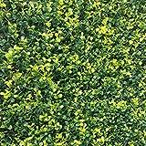 EV sima100050bom Setos artificial, Verde, 100x 50x 3cm