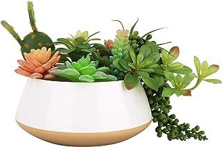LA JOLIE MUSE Large Succulent Planter Plant Pots, Ceramic Indoor Outdoor Garden Pot with Drainage for Plant Flower, 8 Inc...