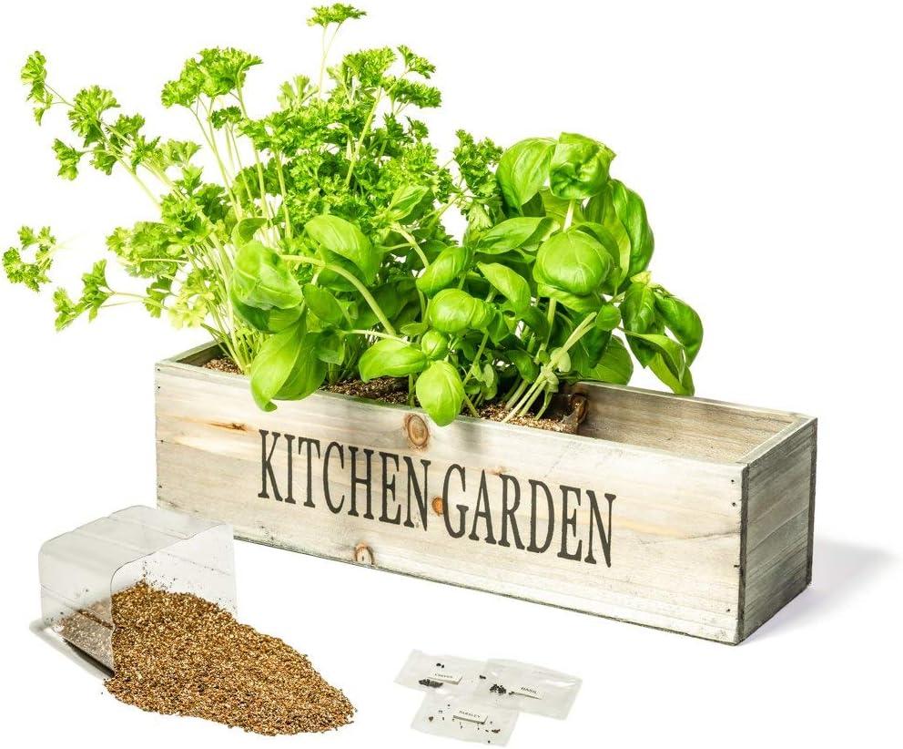 Kitchen Herb Garden Kit Windowsill Window Box Planter with Seeds ...