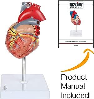 Best heart lung model Reviews