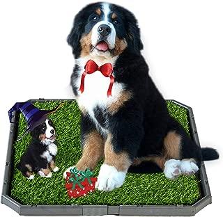 Best dog training mat Reviews