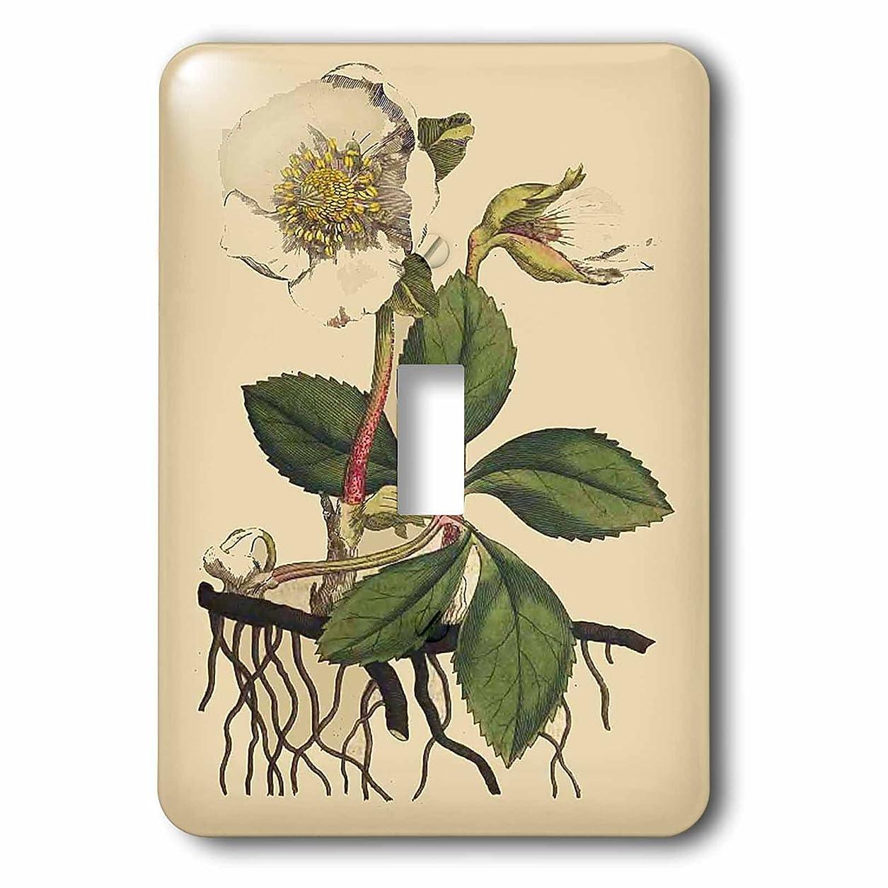 化合物落ち込んでいる打ち上げる3drose LSP 204758?_ 1印刷のクリスマスローズ植物から1700?Single切り替えスイッチ