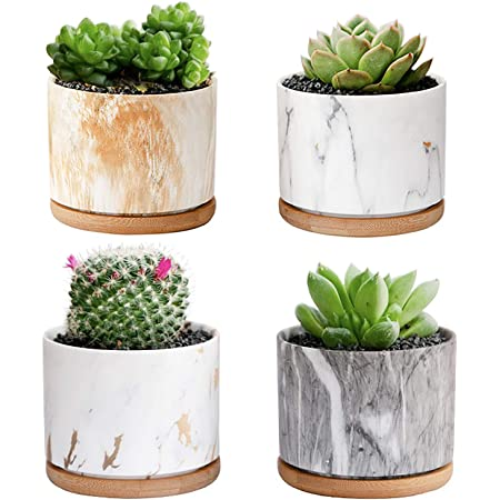 Amazon Com Starpack Premium 3 Piece Mini White Ceramic Succulent Planter Pot Set With Bamboo Bases Kitchen Dining