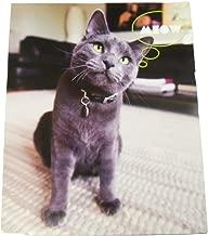 Innovative Design 101 Kitten Folder ~ Meow (Really?)