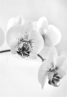 The Art Stop Photo Nature Plant Orchid Flower Black White Print F12X4368