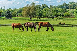 Thoroughbred Horses Grazing in Pasture Photo Print Stretched Canvas Wall Art 24x16 inch