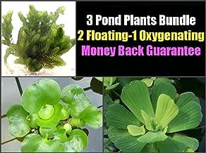 3 Pond Plants Bundle - Water Lettuce, Water Hyancinth and Hornwort