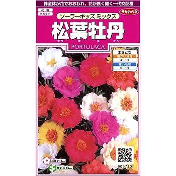サカタのタネ 実咲花5710 松葉牡丹 ソーラーキッズミックス 00905710