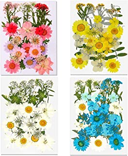 128 Real Dried Pressed Flowers for Crafts -Colorful Daisies Hydrangea Leaves DIY Craft Candle Resin Accessories Jewelry Pe...