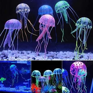real jellyfish aquarium