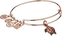 Charity By Design Bangle - Sea Turtle