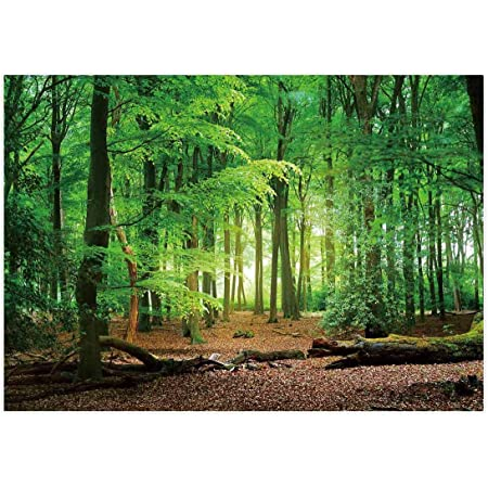 Forest 7x5 FT Vinyl Photo Backdrops,Sun Through Tree Branch and Leaf Top Relaxing Peaceful Serene Environment Rural Design Background for Selfie Birthday Party Pictures Photo Booth Shoot
