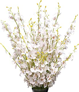 """Silk Flowers in Bulk Wholesale Artificial Orchids, 12 Pcs (Each 38.5""""), for Wedding Festive Party Home Office Decoration, Not Include Vase"""