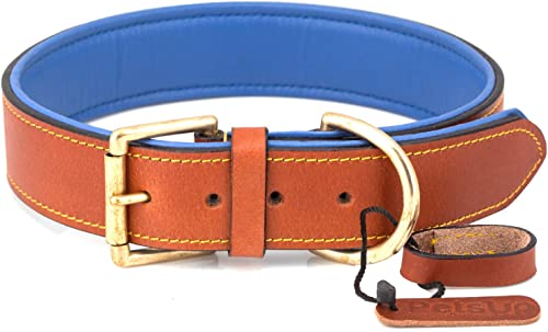 PetsUp Dog Collar Neck Belt for Small To Large Dogs (Medium, Tan\Blue)