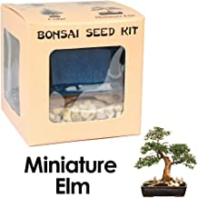 Eve's Miniature Elm Bonsai Seed Kit, Woody, Complete Kit to Grow Elm Bonsai from Seed