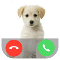 Video Call Chat Barf Calling
