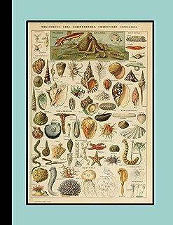 Vintage botanical illustration Journal: Shells and sealife  - The large botanical journal for the marine life, shellfish a...