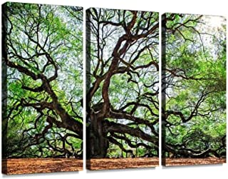 Best charleston sc framed prints Reviews