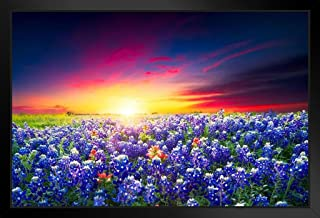 Spring Sunrise Bluebonnets Texas Hill Country Photo Black Wood Framed Art Poster 20x14
