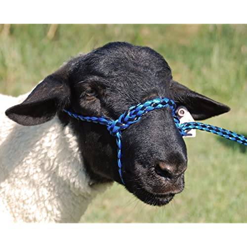 Sheep Lamb and Goat Adjustable Halter with snap Lead black w//multi Showing Sheep