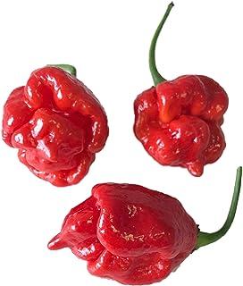 Trinidad Scorpion Butch T 10 Samen Über 1.500.000 Scoville Schärfer als Bhut Jolokia -VonSamenchilishop