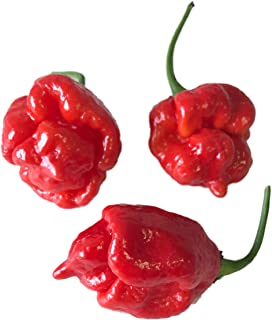 100 Semillas Trinidad Scorpion Butch T -Chile- by Samenchilishop