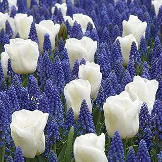 Burpee's Cool Blues Mix - 21 Flower Bulbs | Blue & White |