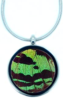 Best real butterfly wing jewelry Reviews
