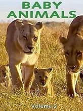narrative animals