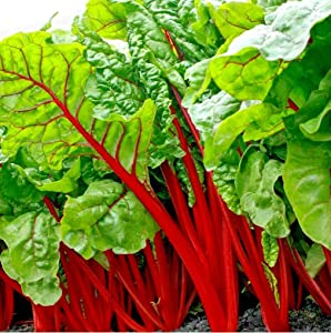S-pone, 300+ Swiss Chard Rhubarb Seeds Vegetable Seeds for Planting Home Gardens Non-GMO