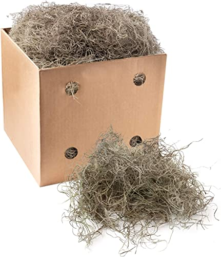 high quality Royal online sale Imports Preserved 2021 Natural Spanish Moss, Fresh Dried Shredded Loose Chunks, 3 LB Bulk Case, Natural outlet online sale