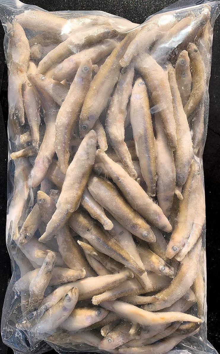 世界の窓発火するバット冷凍ワカサギ IQF(バラ凍結)2㎏(1㎏×2袋)公魚☆送料無料☆